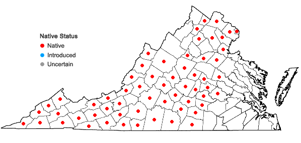 Locations ofCystopteris protrusa (Weatherby) Blasdell in Virginia