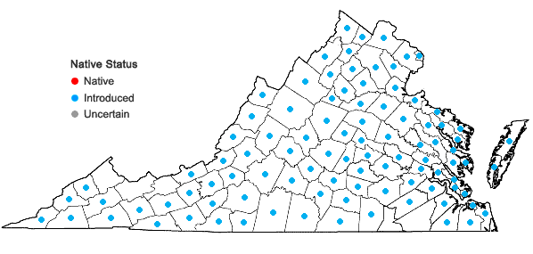 Locations ofDactylis glomerata L. ssp. glomerata in Virginia