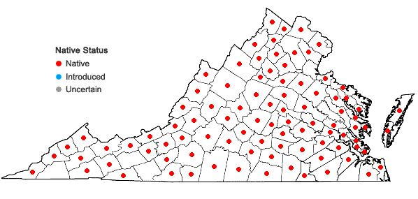 Locations ofDanthonia spicata (L.) Beauv. ex Roemer & J.A. Schultes in Virginia