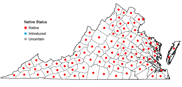 Locations ofDennstaedtia punctilobula (Michx.) T. Moore in Virginia