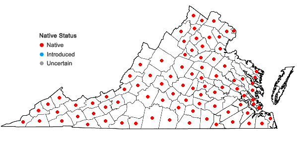 Locations ofDesmodium rotundifolium DC. in Virginia