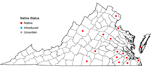 Locations ofDichanthelium angustifolium (Ell.) Gould in Virginia