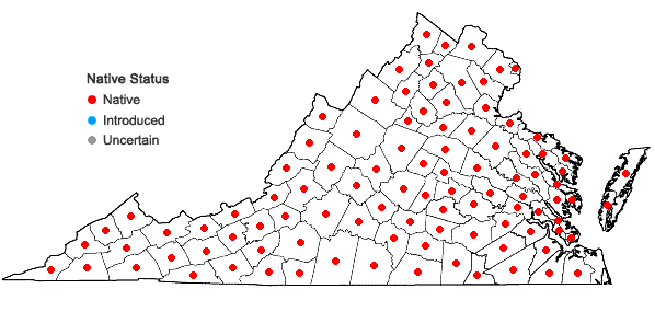 Locations ofDichanthelium clandestinum (L.) Gould in Virginia