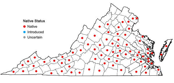 Locations ofDichanthelium commutatum (J.A. Schultes) Gould var. commutatum in Virginia