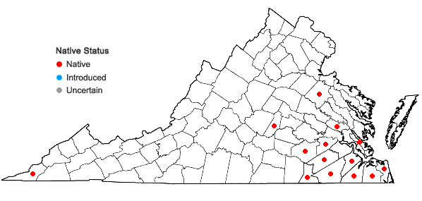 Locations ofDichanthelium consanguineum (Kunth) Gould & C.A. Clark in Virginia
