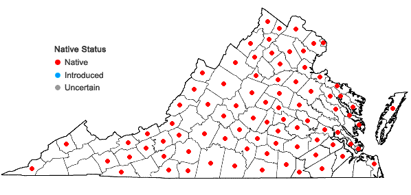 Locations ofDichanthelium depauperatum (Muhl.) Gould in Virginia