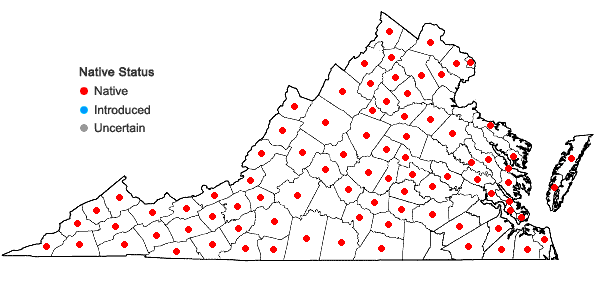 Locations ofDichanthelium dichotomum (L.) Gould var. dichotomum in Virginia