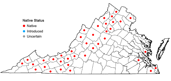Locations ofDichanthelium latifolium (L.) Harvill in Virginia