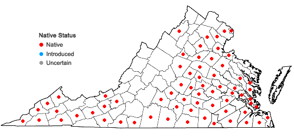 Locations ofDichanthelium laxiflorum (Lam.) Gould in Virginia