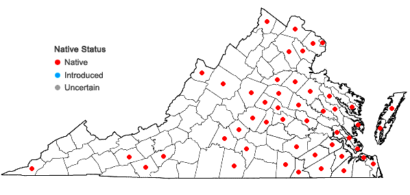 Locations ofDichanthelium meridionale (Ashe) Freckmann in Virginia