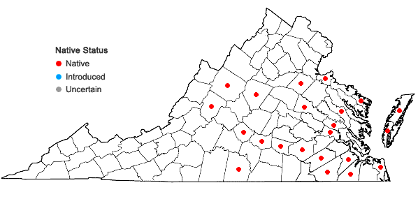 Locations ofDichanthelium ovale (Ell.) Gould & C.A. Clark var. addisonii (Nash) Gould & C.A. Clark in Virginia