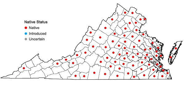 Locations ofDichanthelium polyanthes (Schultes) Mohlenbrock in Virginia