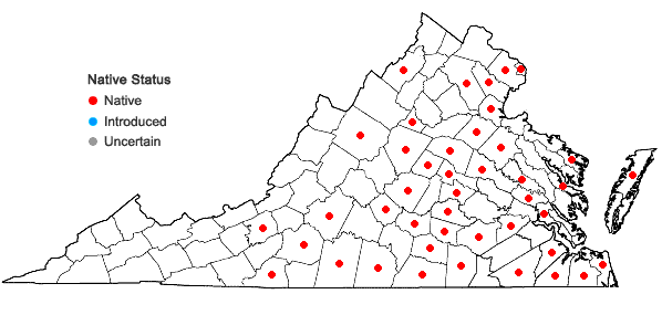 Locations ofDigitaria filiformis (L.) Koeler var. filiformis in Virginia