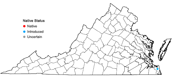 Locations ofDigitaria texana A.S. Hitchc. in Virginia