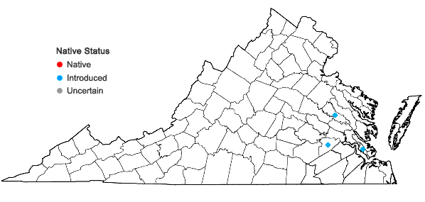 Locations ofDiplachne fusca (L.) P. Beauv. ex Roem. & Schult. var. uninervia (J. Presl) P.M. Peterson & N. Snow in Virginia