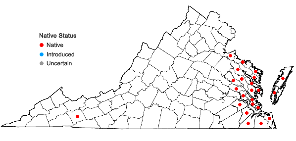 Locations ofDistichlis spicata (L.) Greene in Virginia