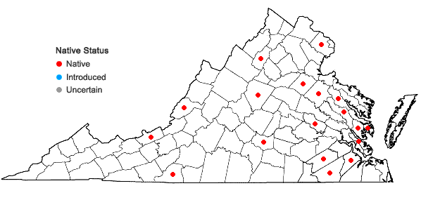 Locations ofDitrichum lineare (Sw.) Lindb. in Virginia
