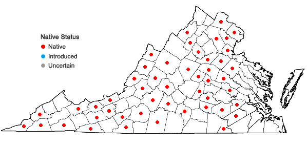 Locations ofDoellingeria umbellata (P. Mill) Nees in Virginia
