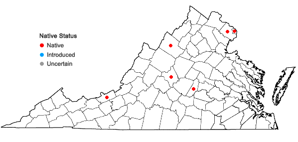 Locations ofDryopteris ×triploidea Wherry in Virginia