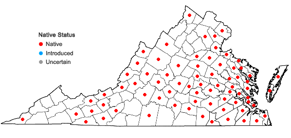 Locations ofDulichium arundinaceum (L.) Britton var. arundinaceum in Virginia