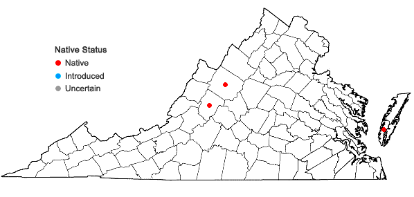 Locations ofEchinodorus tenellus (Martius) Buchenau in Virginia