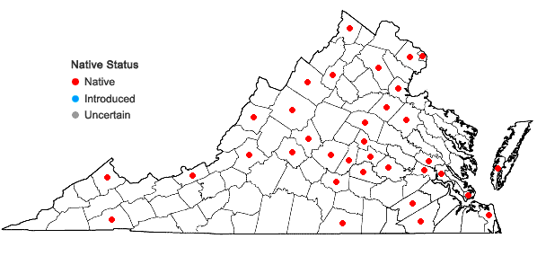 Locations ofEleocharis acicularis (L.) Roemer & Schultes in Virginia