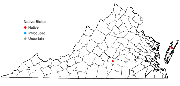 Locations ofEleocharis equisetoides (Elliott) Torrey in Virginia