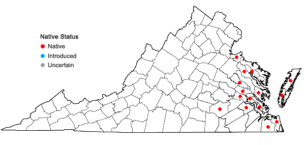 Locations ofEleocharis fallax Weatherby in Virginia