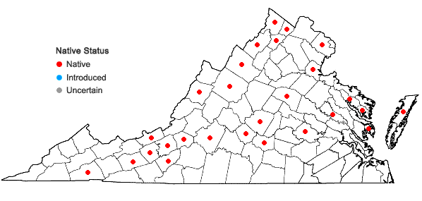 Locations ofEleocharis palustris (L.) Roemer & Schultes in Virginia