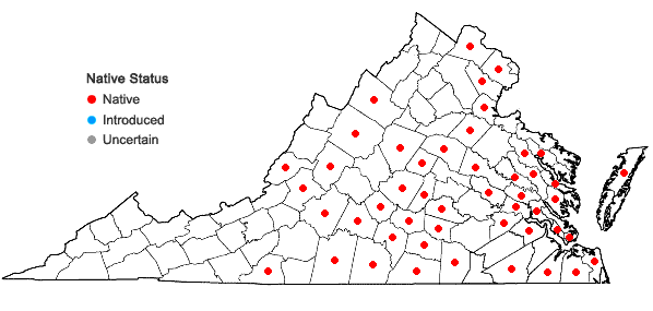 Locations ofEleocharis quadrangulata (Michaux) R. & S. in Virginia