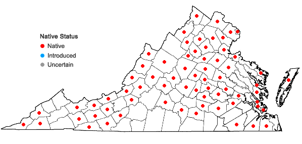 Locations ofEleocharis tenuis (Willd.) Schultes var. tenuis in Virginia