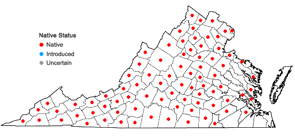 Locations ofElymus hystrix L. var. hystrix in Virginia