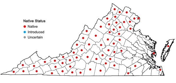 Locations ofElymus riparius Wieg. in Virginia