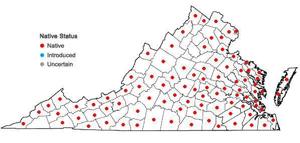 Locations ofEpifagus virginiana (L.) W.Barton in Virginia