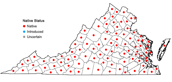 Locations ofEpigaea repens L. in Virginia