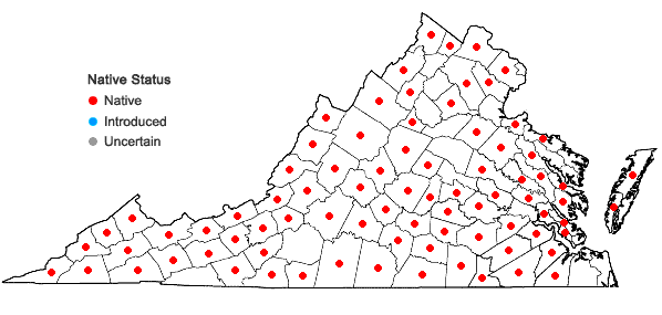 Locations ofEquisetum hyemale L. ssp. affine (Engelm.) Calder & R.L. Taylor in Virginia