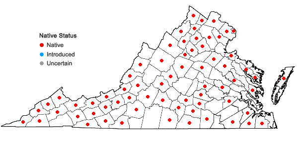 Locations ofEragrostis capillaris (L.) Nees in Virginia