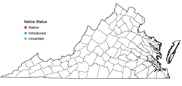 Locations ofEranthis hyemalis (L.) Salisb. in Virginia