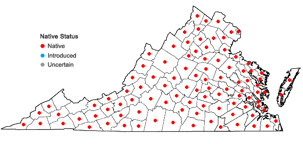 Locations ofErechtites hieraciifolius (L.) Raf. ex DC. in Virginia