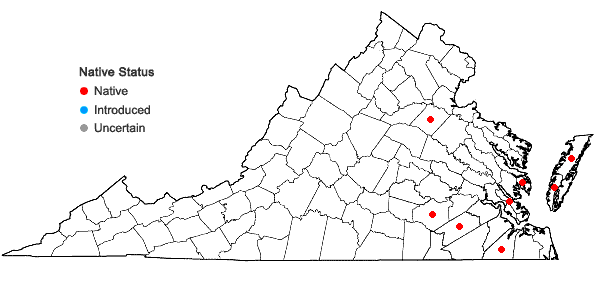 Locations ofErianthus coarctatus Fernald in Virginia