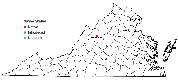 Locations ofEriocaulon aquaticum (Hill) Druce in Virginia