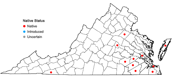Locations ofEriocaulon decangulare L. var. decangulare in Virginia