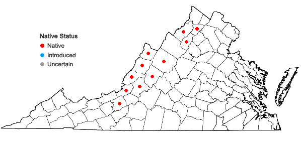 Locations ofEriogonum allenii S. Wats. in A. Gray et al. in Virginia