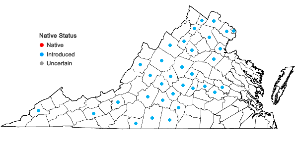 Locations ofErysimum cheiranthoides Linnaeus in Virginia