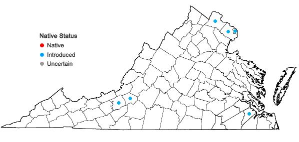 Locations ofEuonymus europaeus L. in Virginia