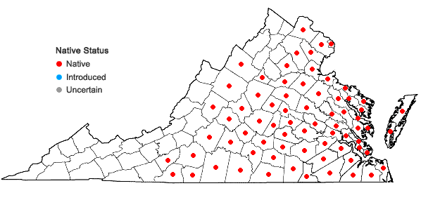 Locations ofEupatorium hyssopifolium L. in Virginia