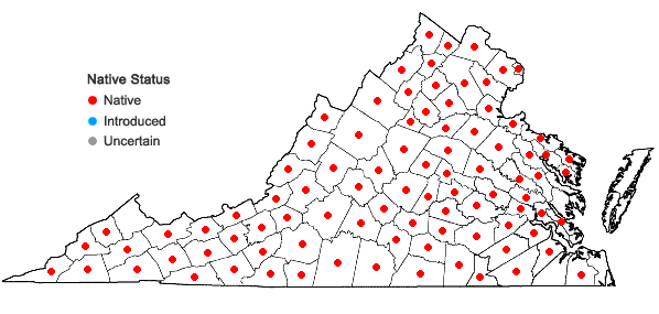 Locations ofEuphorbia corollata L. in Virginia