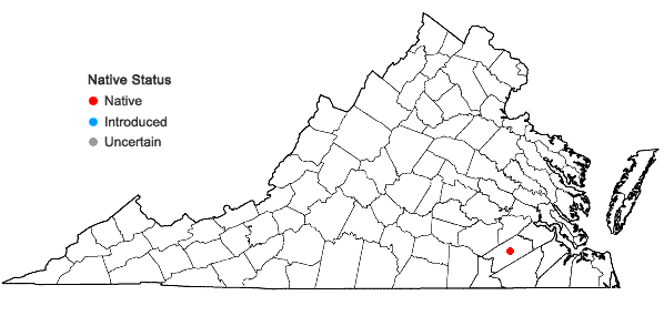 Locations ofEuphorbia exserta (Small) Coker in Virginia