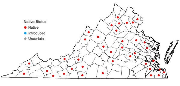 Locations ofEurhynchiastrum pulchellum (Hedw.) Ignatov & Huttunen var. pulchellum in Virginia