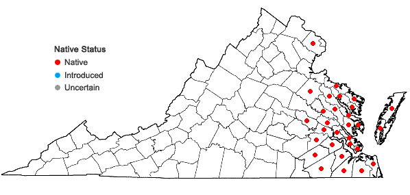 Locations ofEutrochium dubium (Willd. ex Poir.) E.E. Lamont in Virginia